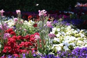 Kwiaty do Polski